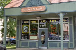 Stray Cat Cafe in Arlington's Westover Village