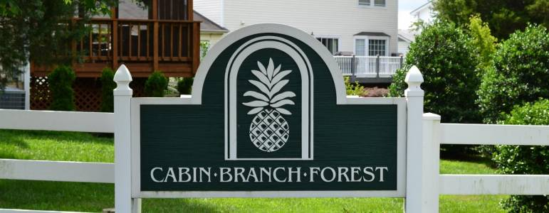 Cabin Branch Forest