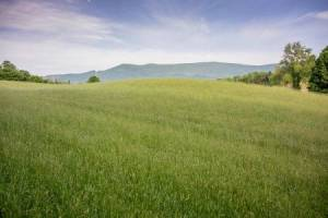 Homes for Sale in Berryville, VA