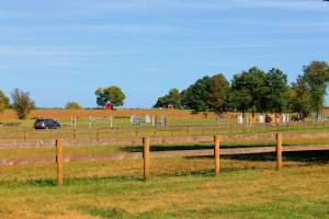 Pony Club in Poolesville, Maryland