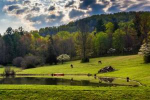 Homes for Sale in Clarke County, VA